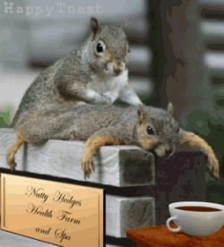 squirrels even get out of allignment